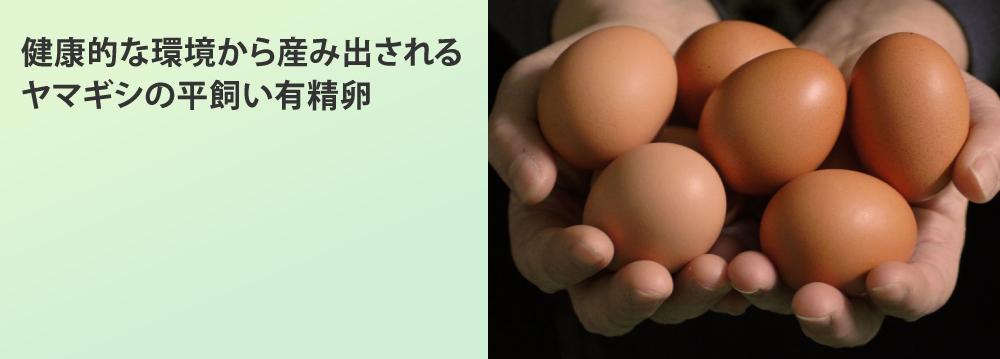 カテゴリー:ヤマギシの平飼い有精卵