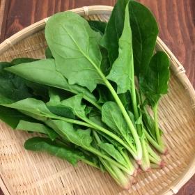 ヤマギシの野菜 三重県産小松菜